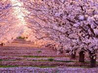 Menù di primavera